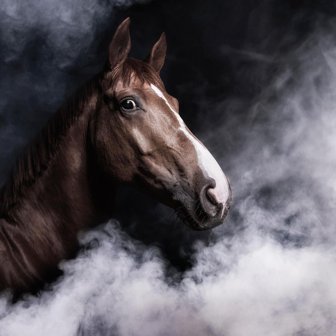 Horse fedya2 small
