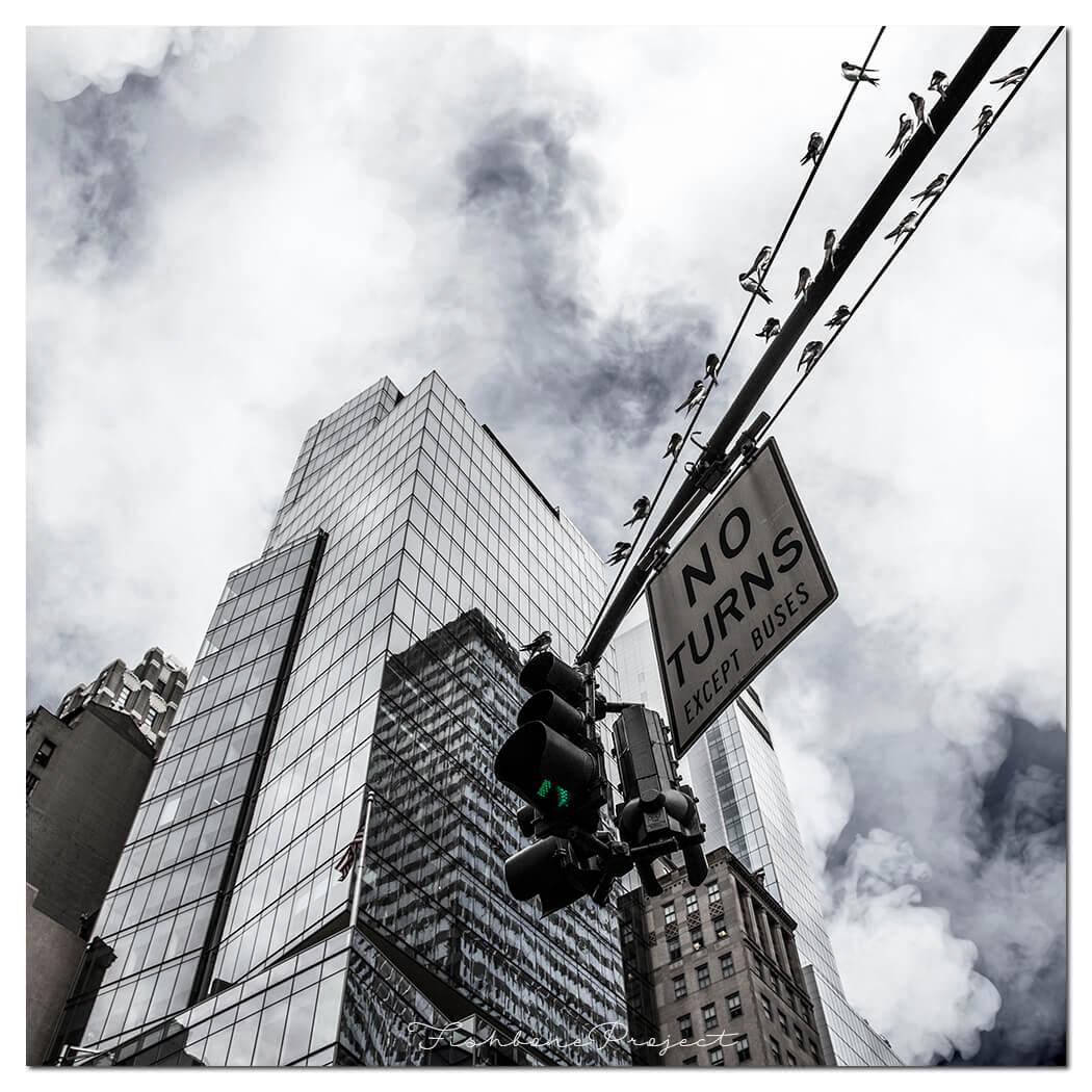 """""""NY Birds"""" 100 x 100"""